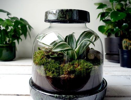 Grow-it-yourself terrarium