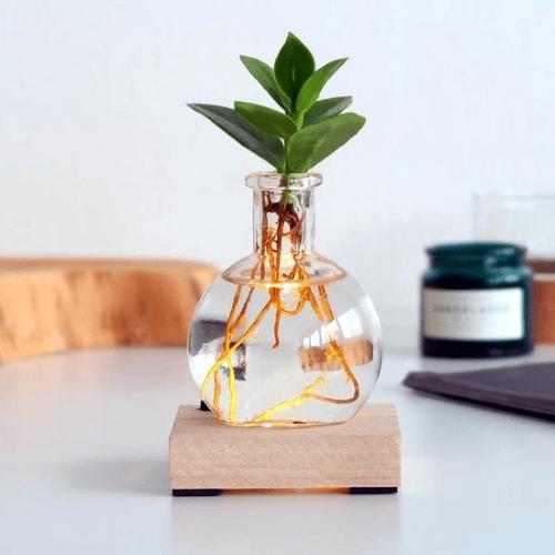 lichtplantje, plant op water, hydroponie, clusia, lichtvaasje, plant cadeau tips
