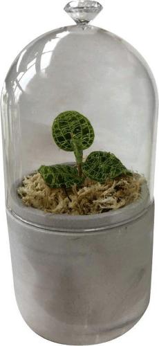 terrarium, mini terrarium, jewel orchidee, plant cadeau