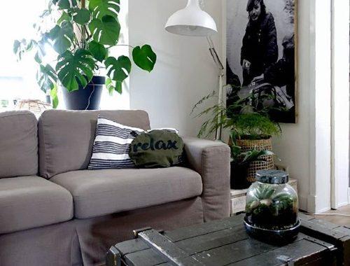 Feng Shui en kamerplanten