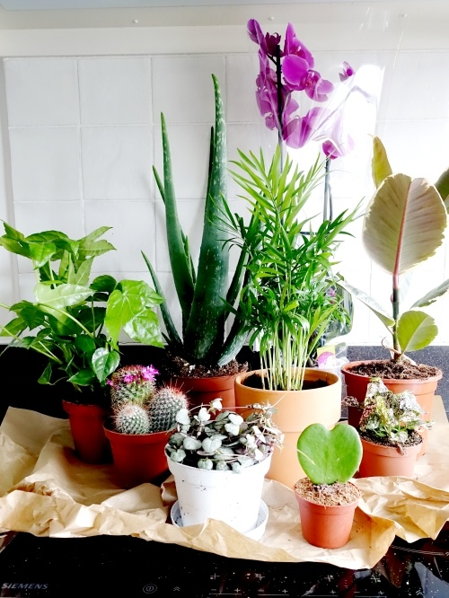 groene kneusjesbox, review, plantje.nl