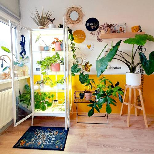 anouk, plantstate, blog interview, plantparent, plantgekkie, plantenkamer, ikea greenhouse cabinet