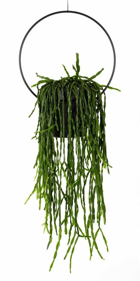 Rhipsalis, hangplant, blikvanger, plantenhanger, Happy Circle Original