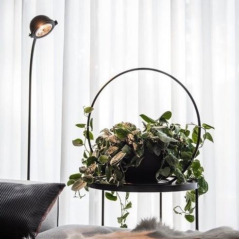 Scindapsus pictus, hangplant, blikvanger, plantenhanger, Happy Circle Original