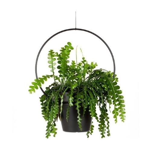 Zaagcactus, hangplant, blikvanger, plantenhanger, Happy Circle Original