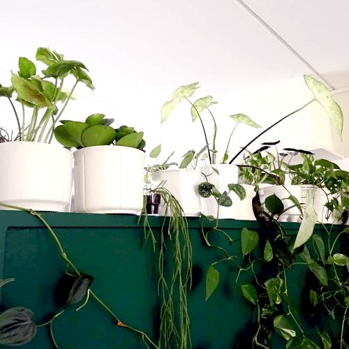 Kamerplanten, plantstyling, hangplanten, plantfan