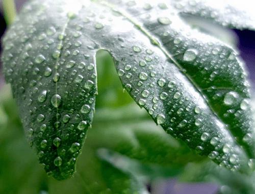 Kamerplanten verzorgen in het voorjaar
