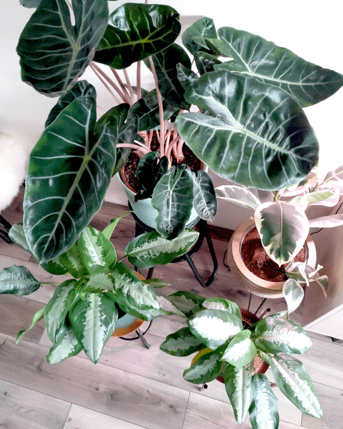 kamerplanten, takkewijven, plantfan, interview, kamerplantenliefhebber