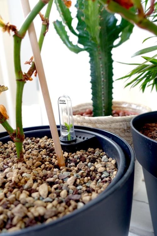 self-watering insert, zelfwaterende pot, elho, watermeter. self watering pot, water geven, tips, te veel water, kamerplant redden, natte potgrond drogen, wortelrot
