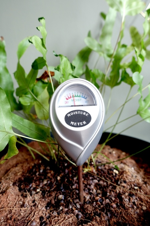 watermeter, vochtigheidsmeter, moisture meter, water geven, tips, te veel water, kamerplant redden, natte potgrond drogen, wortelrot