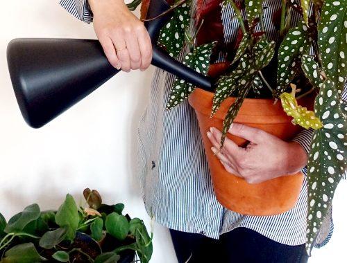 kamerplanten water geven tips