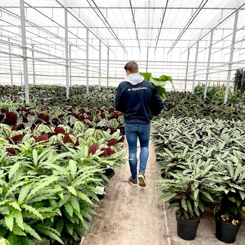 Plantfan Interview, De Plantjesman, Wouter, vers van de kweker, kwekerij
