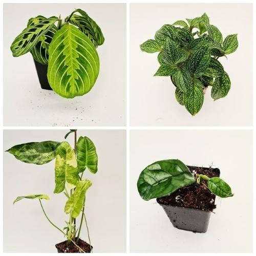 groen in huis, webshop, kamerplanten, online