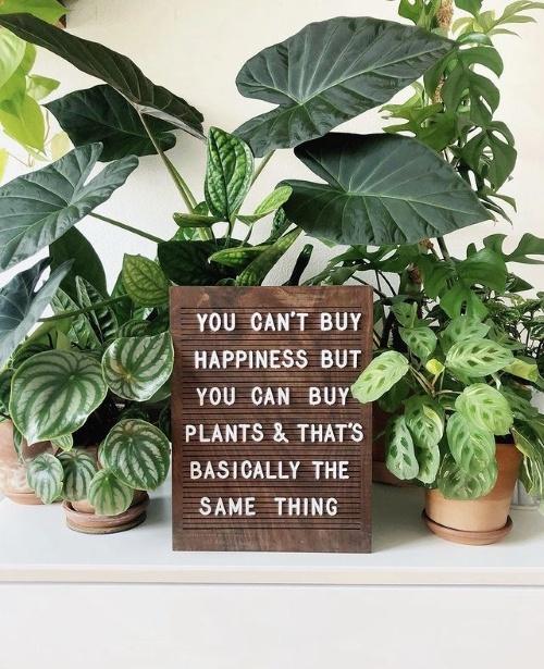 plnts.com, kamerplanten, online, shoppen